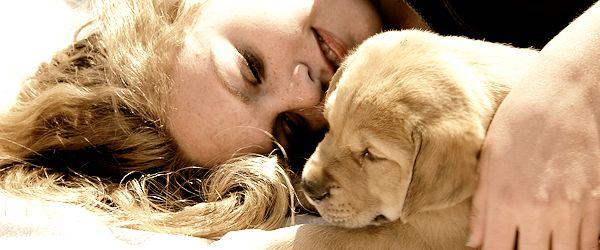 Dog House Adoptions: Adopt!