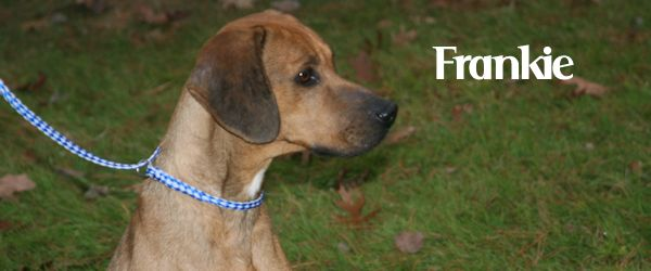 ADOPTED! Frankie – Best Companion Adventure Seeker!
