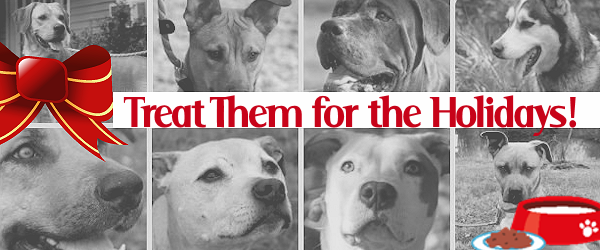 Dear Santa, Our Rescue Dogs Have Three Wishes