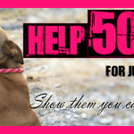 Help 50 Dogs for Just a Few Bucks!