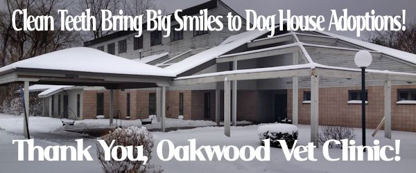 Oakwood Vet Clinic
