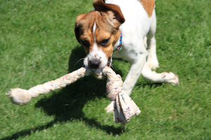 Mill Dog Toys