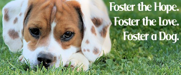 Why Foster a Dog? Because…