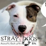 "Watch ""PICK ME!"" – Stray Dogs' Rescue Video Debut!"