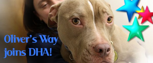 Oliver's Way Joins DHA. Provides Big Benefit to Local Dogs in Need!