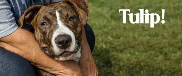 Tulip at Dog House Adoptions