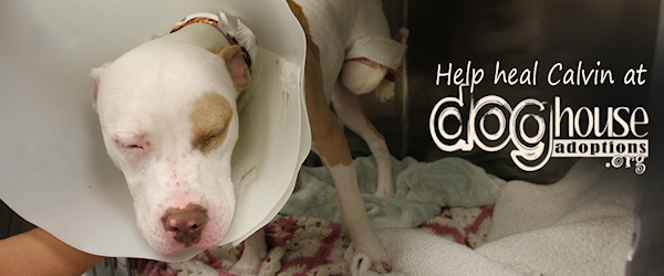 Help Calvin, a 9 Month Puppy, Heal his Dislocated Hip, Heart and Home.