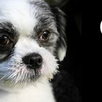 ADOPTED! Oreo – the sweet treat to greet – every single day!
