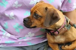 Kate Lynne at Dog House Adoptions