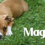 "ADOPTED! Magnolia, the ""Itty Pittie"" Easter Egg Puppy!"
