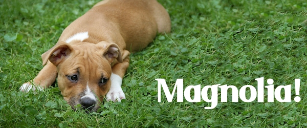 Magnolia at Dog House Adoptions