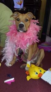 Magnolia at Dog House Adoptions