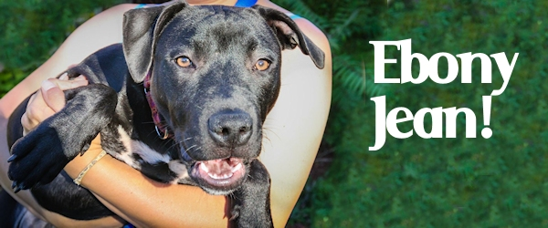 Ebony Jean at Dog House Adoptions