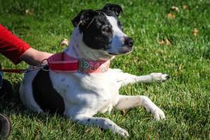 Daisy at Dog House Adoptions