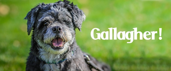 Gallagher at Dog House Adoptions