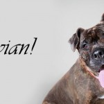 ADOPTED! Vivian finds forever love!