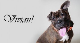 Vivian at Dog House Adoptions